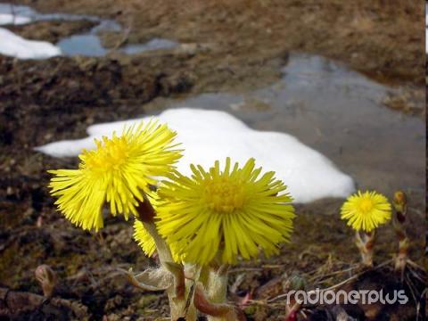 Картинки о марте о весне