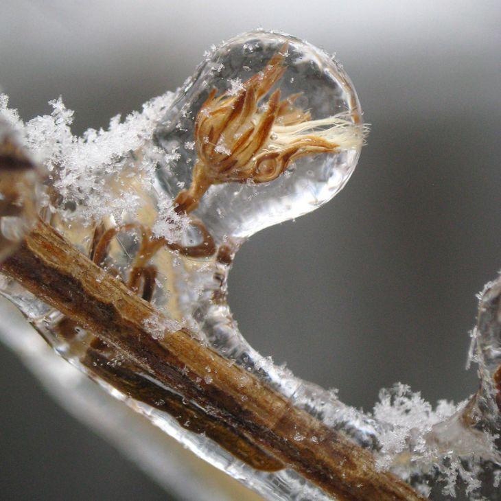 Фотографии после ледяного дождя