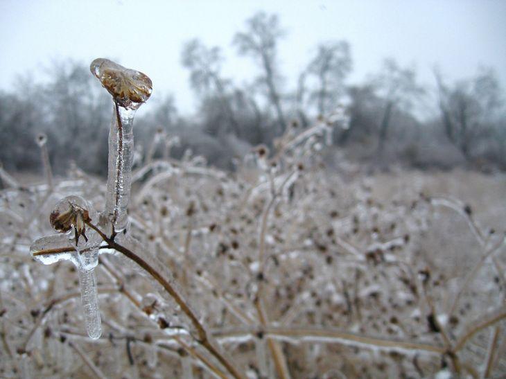 После ледяного дождя