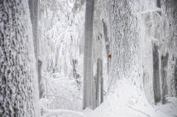 Красивые фотографии чешского фотографа Janek Sedlar
