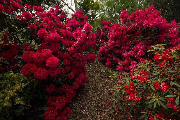 Сад Maple Glen garden в Новой Зеландии