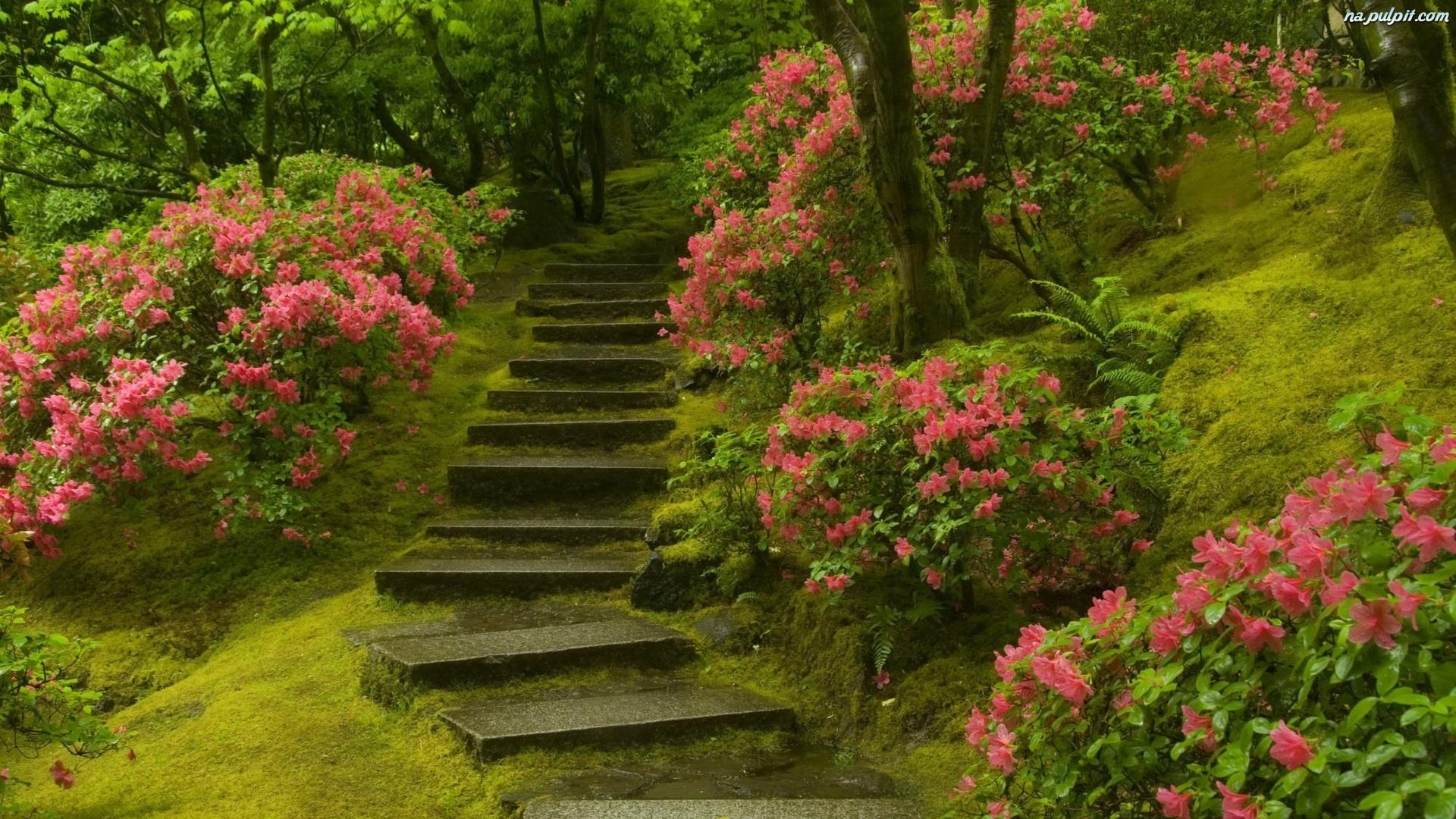Красивые картинки на рабочий стол лето природа водопады цветы - a5505