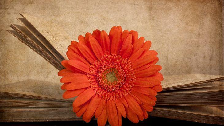 Красивые картинки на рабочий стол: Книги (27 фото)