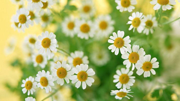 Красивые картинки на рабочий стол: Цветы (50 фото)
