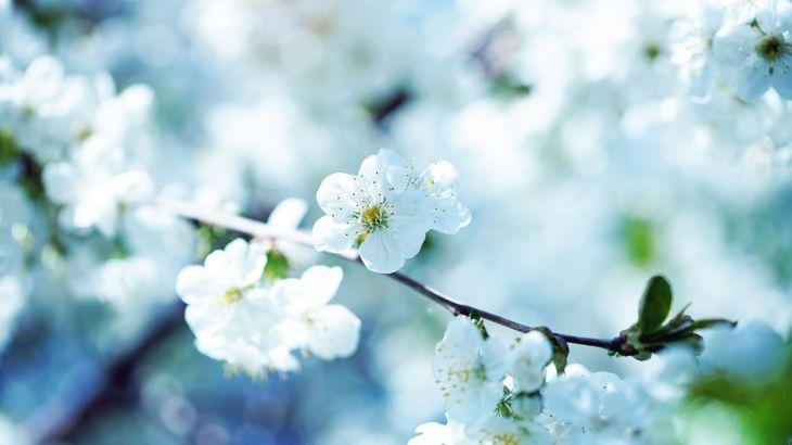 Красивые картинки на рабочий стол: Природа (39 фото)