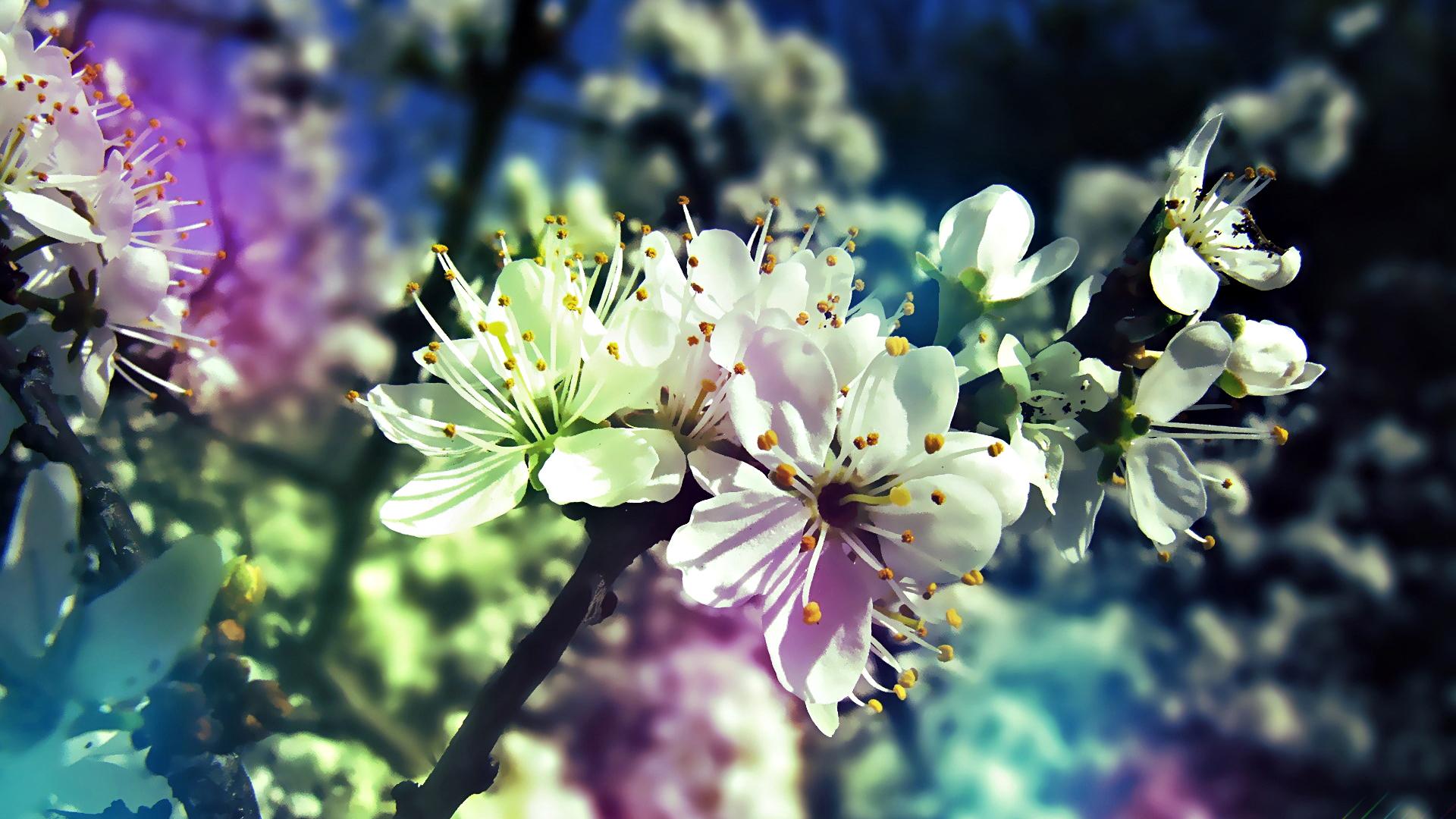 весна картинки на робочий стол