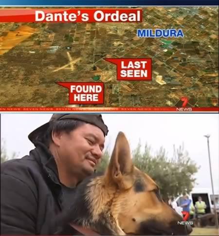 Самые преданные собаки!
