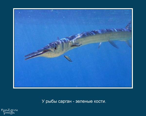Котоматрица - 4 - Страница 3 1368844801_www.radionetplus.ru-13