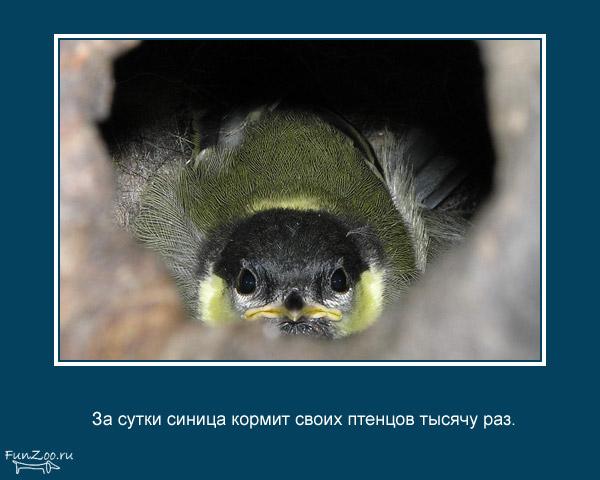 Котоматрица - 4 - Страница 3 1368844808_www.radionetplus.ru-5