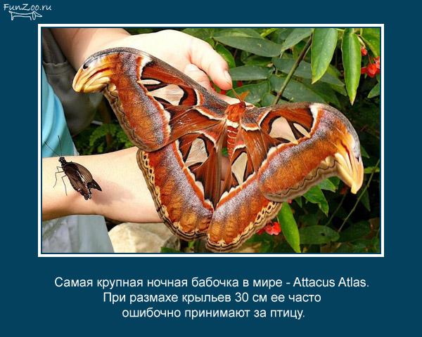 Котоматрица - 4 - Страница 3 1368844819_www.radionetplus.ru-15