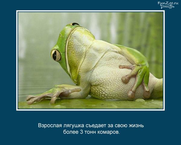 Котоматрица - 4 - Страница 3 1368844819_www.radionetplus.ru-25