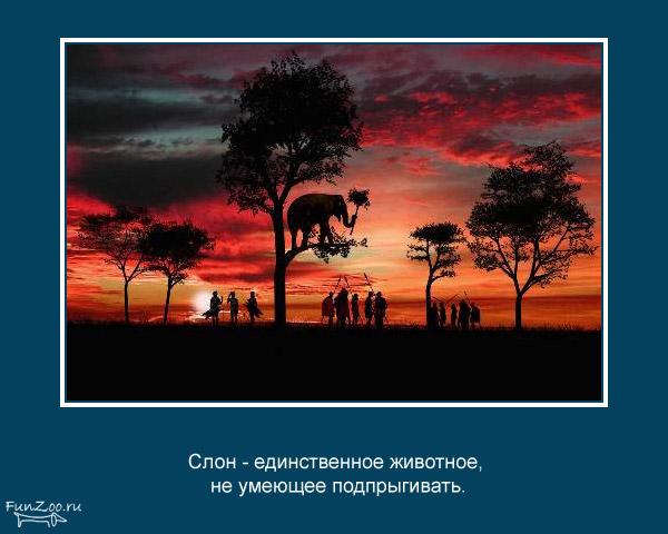 Котоматрица - 4 - Страница 3 1368844821_www.radionetplus.ru-18