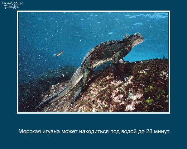 Котоматрица - 4 - Страница 3 1368844831_www.radionetplus.ru-6