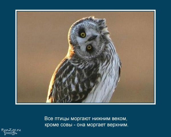 Котоматрица - 4 - Страница 3 1368844832_www.radionetplus.ru-11