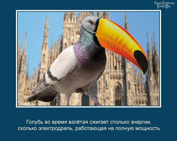 Котоматрица - 4 - Страница 3 1368844835_www.radionetplus.ru-24