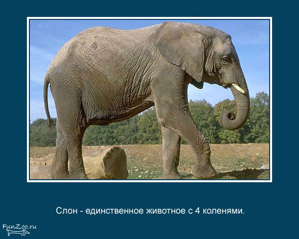 Котоматрица - 4 - Страница 3 1368844837_www.radionetplus.ru-21