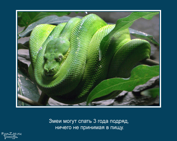 Котоматрица - 4 - Страница 3 1368844841_www.radionetplus.ru-17