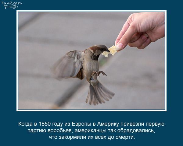 Котоматрица - 4 - Страница 3 1368844841_www.radionetplus.ru-19