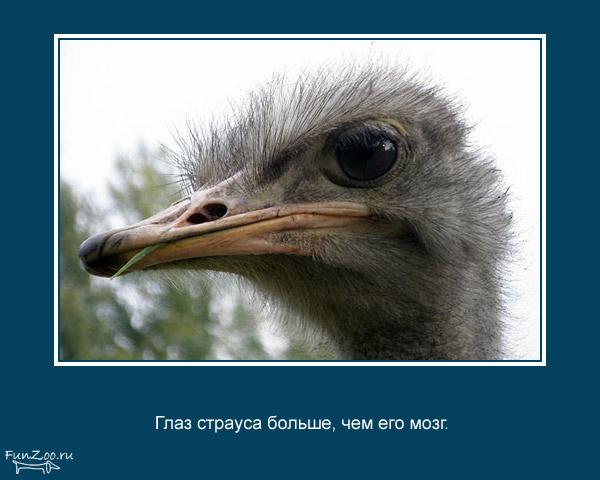 Котоматрица - 4 - Страница 3 1368844842_www.radionetplus.ru-1