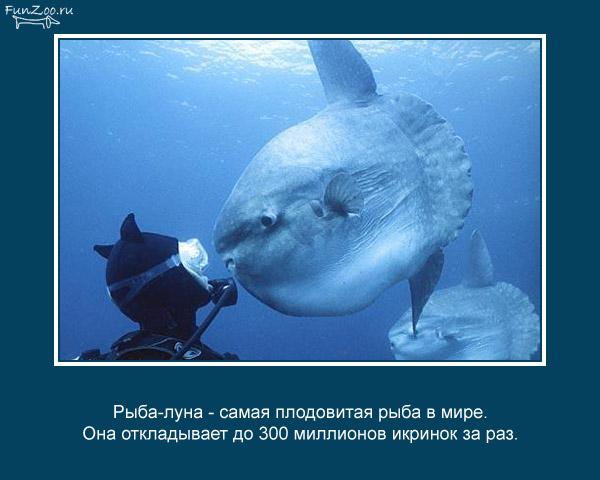 Котоматрица - 4 - Страница 3 1368844846_www.radionetplus.ru-4