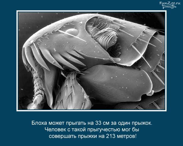 Котоматрица - 4 - Страница 3 1368844856_www.radionetplus.ru-20