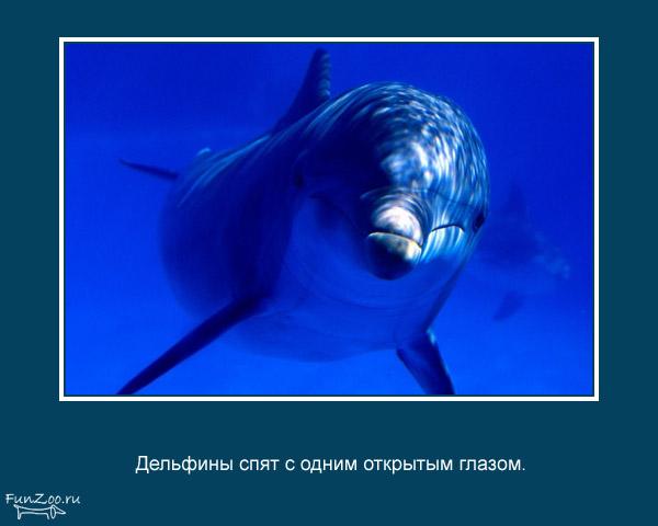 Котоматрица - 4 - Страница 3 1368844861_www.radionetplus.ru-7
