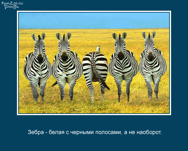 Котоматрица - 4 - Страница 3 1368844861_www.radionetplus.ru-8