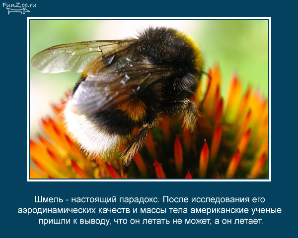 Котоматрица - 4 - Страница 3 1368844876_www.radionetplus.ru-3