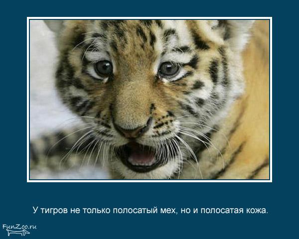 Котоматрица - 4 - Страница 3 1368844878_www.radionetplus.ru-10