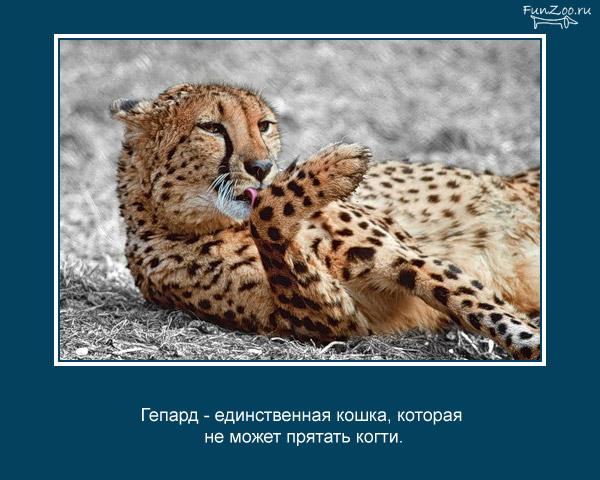 Котоматрица - 4 - Страница 3 1368844884_www.radionetplus.ru-16