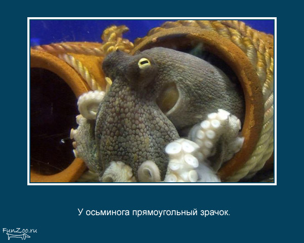 Котоматрица - 4 - Страница 3 1368844885_www.radionetplus.ru-12