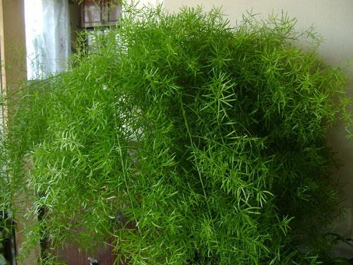 Польза от комнатных растений