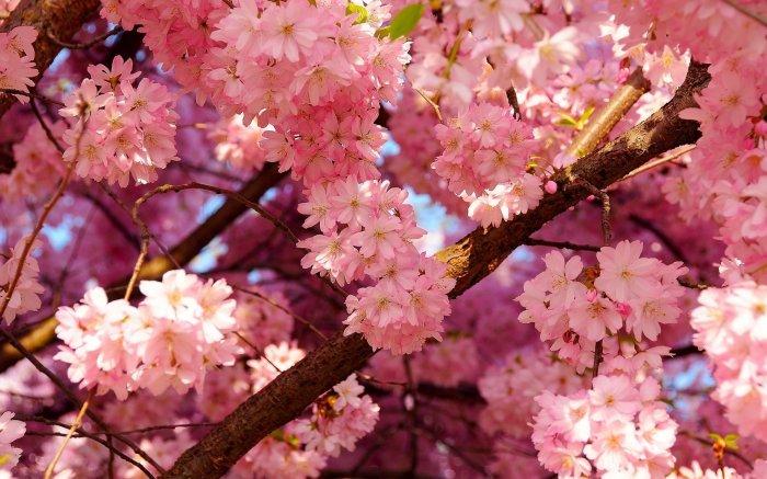 Природы 38 фото красивые фото природы