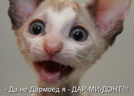 1371966936_www.radionetplus.ru-5.jpg