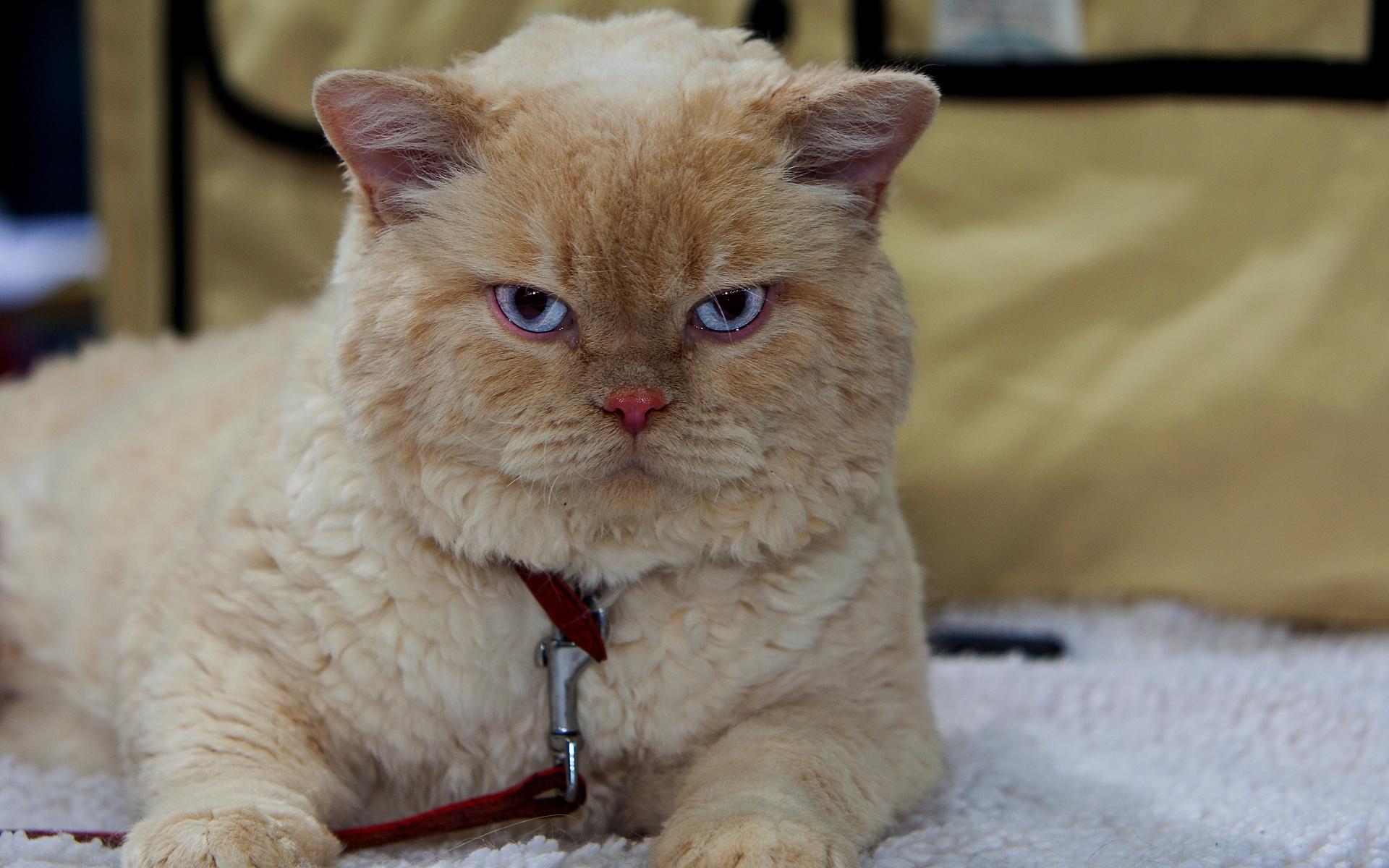 Фото клевых котят 22 фотография