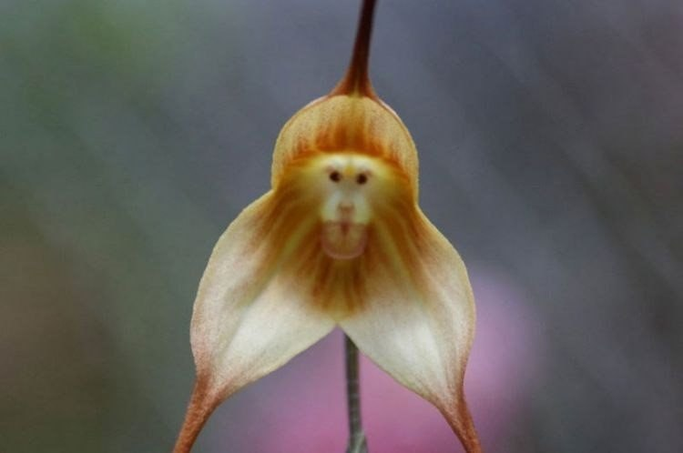 Самый смешной цветок в мире