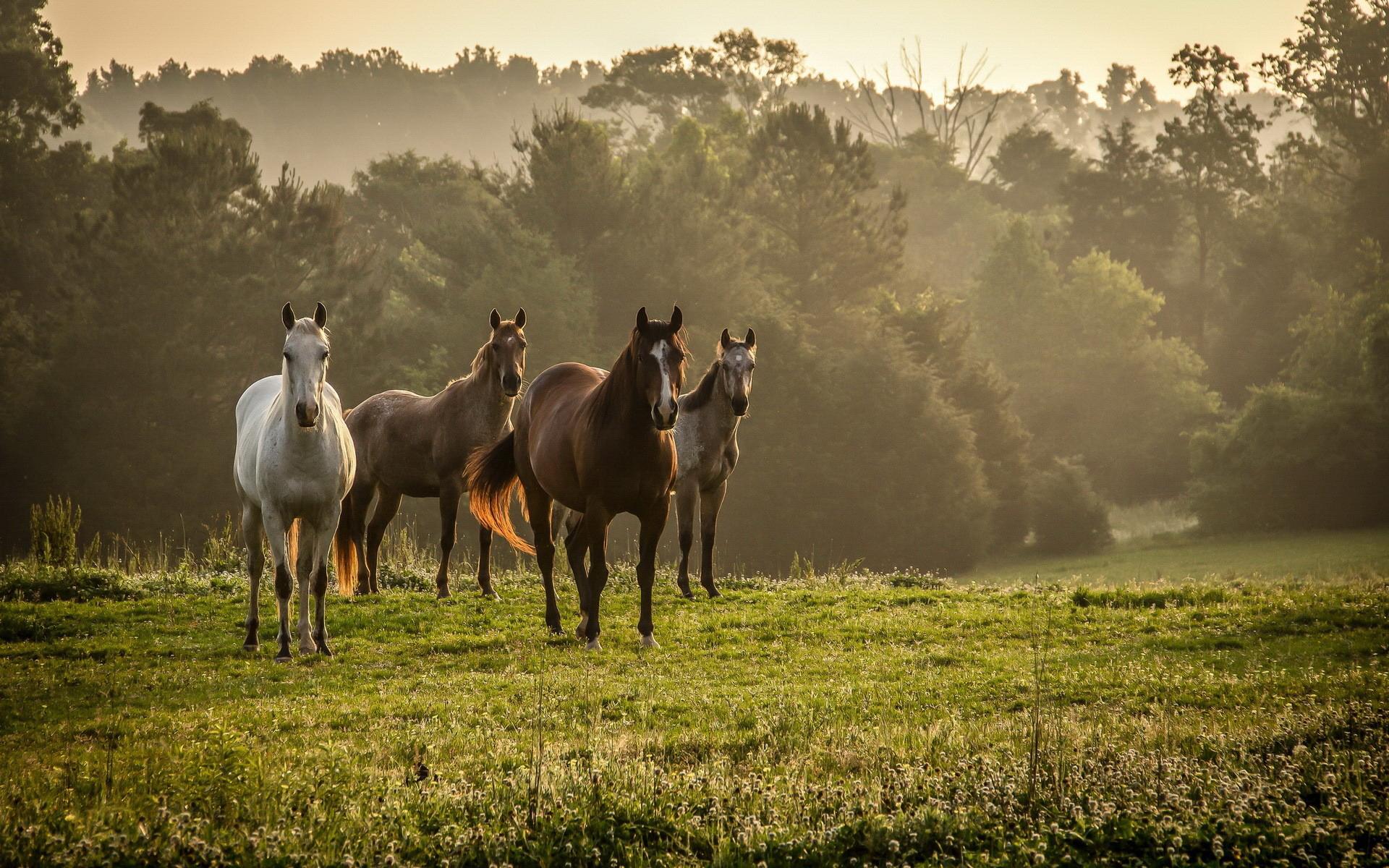 картинки лошади на рабочий стол