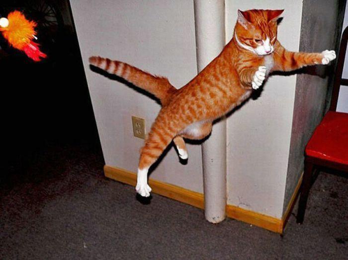 ExSema.  Летающие коты (59 фото) .