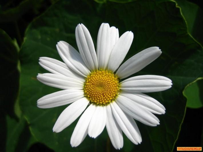 Цветы ИЮЛЯ (19 фото)