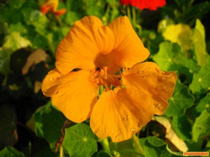 Цветы ИЮЛЯ (17 фото)