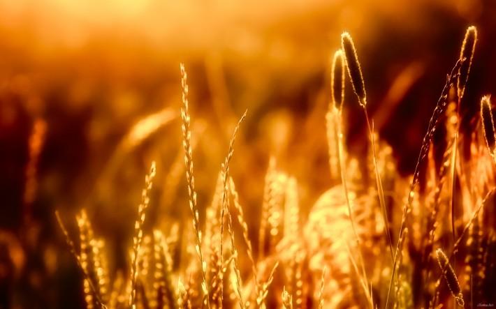 полевая трава