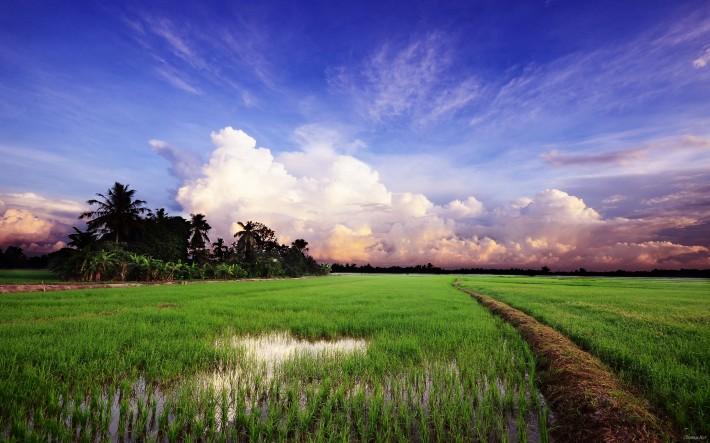 поле после дождя