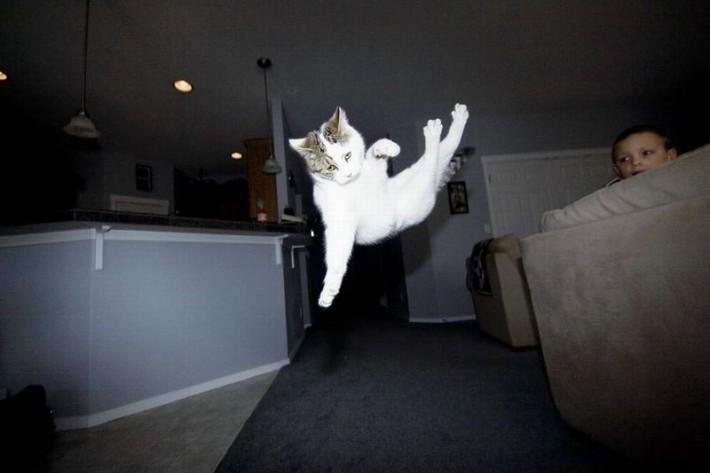Летающие коты.
