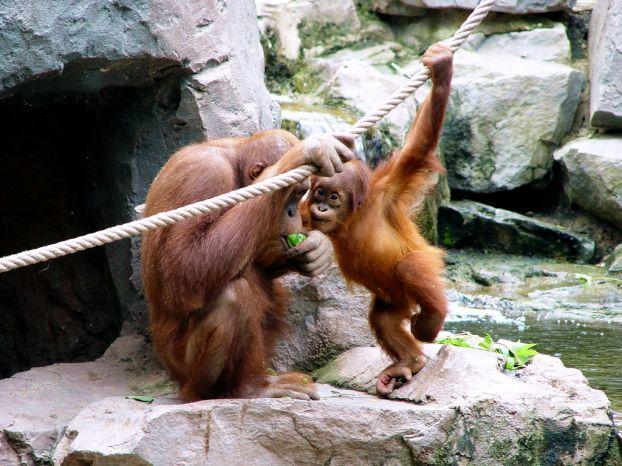 игры обезьянки 56