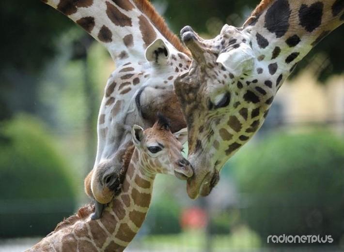 Эти милые и смешные животные! :) №21514