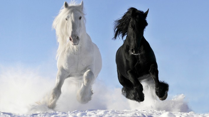 чёрный и белый конь