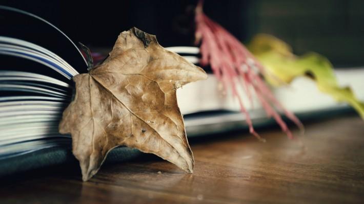 листья клена и книга