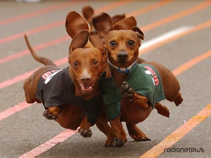 Эти милые и смешные животные! :) 34 фото