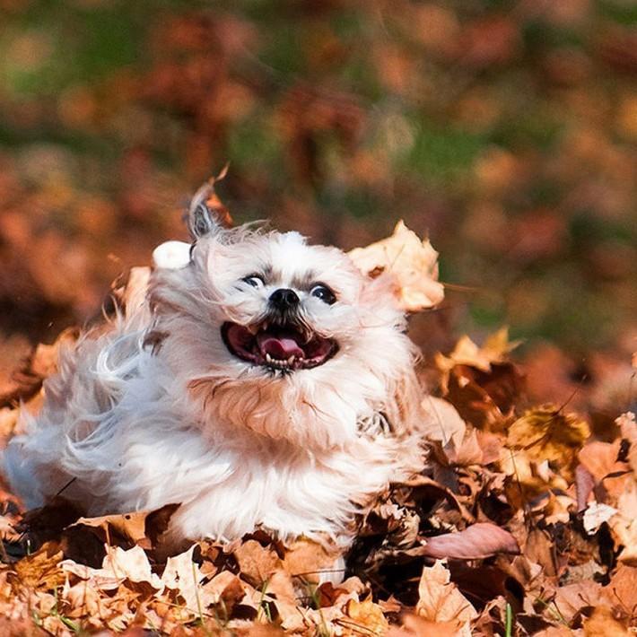 Осенние мордашки :)