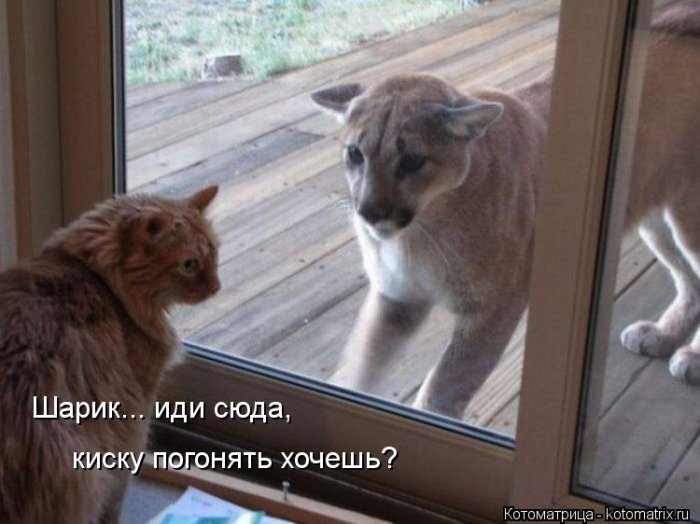 http://www.radionetplus.ru/uploads/posts/2013-12/1388346449_mysli-vsluh-14.jpg
